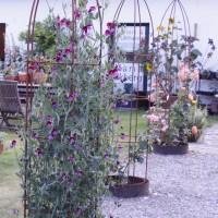 Maria Ekberg Keramik Trädgård
